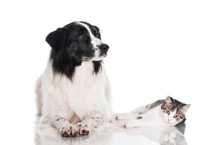 Cat and dog photo