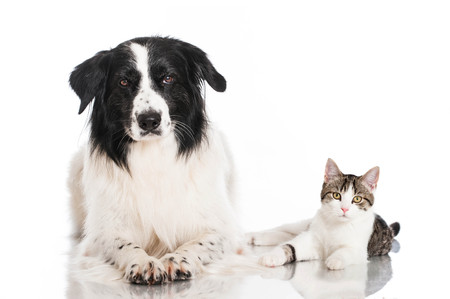 Cat and dog isolated on white photo