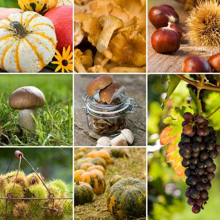 Autumn fruits collage Stock Photo