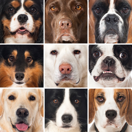 dog school: Breed dog collage