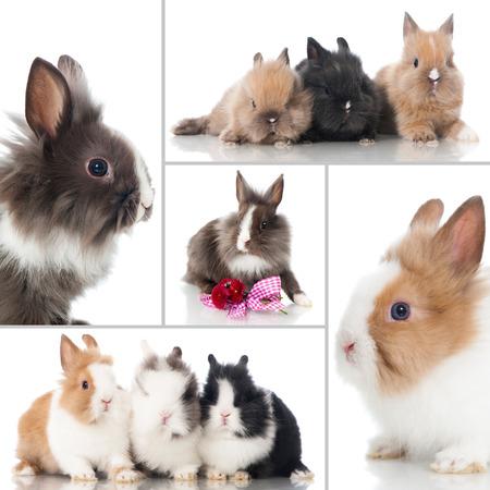 arise: Rabbit collage