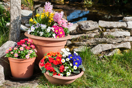 Colorful spring flowers in flower pots photo
