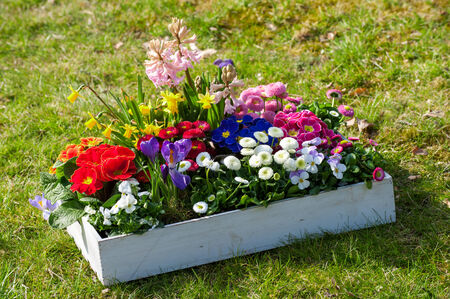 Spring flowers in wooden box photo