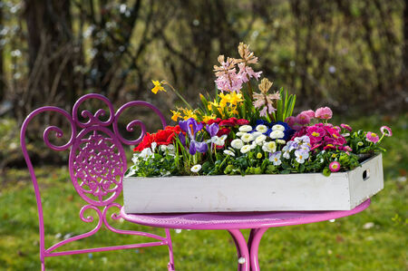 Spring flowers in wooden box on a pink table photo