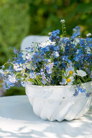 forget: Forget me not flowers
