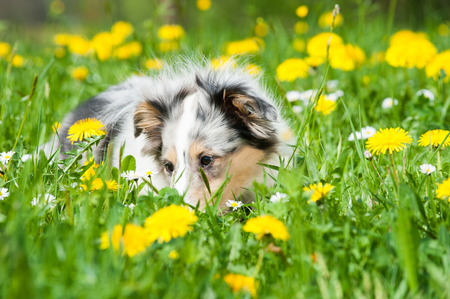 Puppy in a spring meadow photo