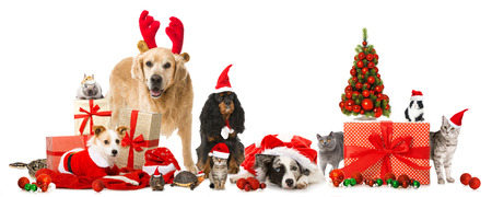 Christmas pets photo