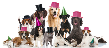 Partij huisdieren Stockfoto