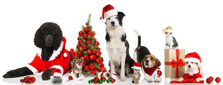 large dog: Christmas pets Stock Photo