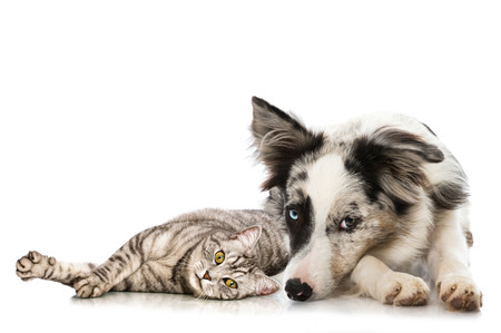 cat isolated: Cat and dog