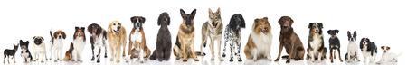 Breed dogs Stockfoto