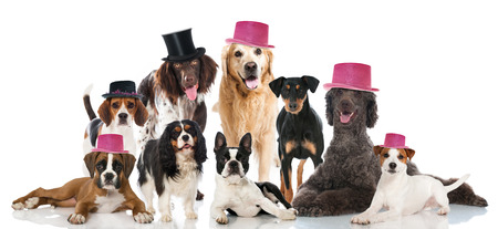 small group of animals: Party dogs Stock Photo