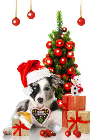 hatred: Christmas puppy Stock Photo