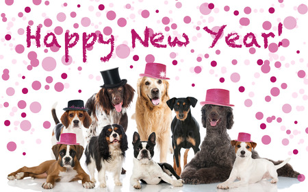 top of the year: Party dogs Stock Photo