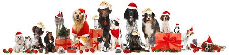 Christmas pets Standard-Bild