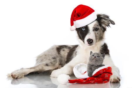 Christmas pets Stock Photo