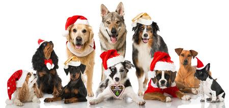 Christmas Standard-Bild - 34354018