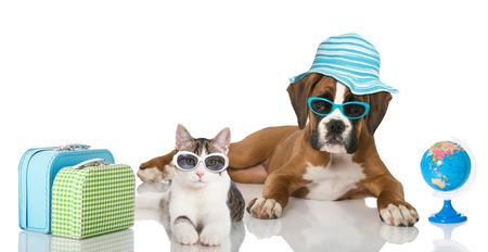 강아지와 새끼 고양이 가방과 해변 우산