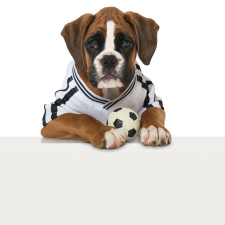 football european championship: Puppy in football jersey isolated on white