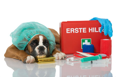 Puppy with first aid kit Stock Photo