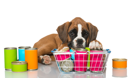 canned food: Puppy with canned food isolated on white