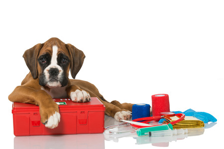first aid kit: Puppy with first aid kit Stock Photo