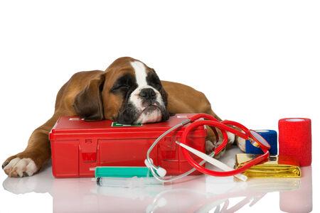 botiquin primeros auxilios: Cachorro con botiqu�n de primeros auxilios