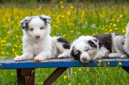 garden bench: Border collie dog on a garden bench