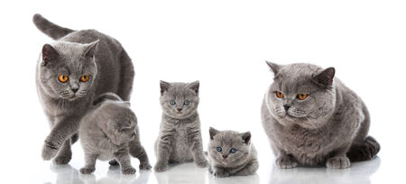 Cat family Standard-Bild - 36771984