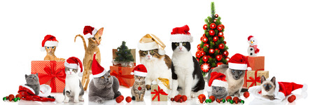 Christmas Cats Standard-Bild