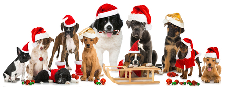 Christmasdogs Standard-Bild