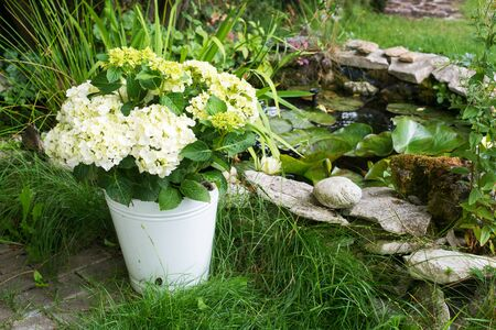 garden pond: Hydrangea at a garden pond Stock Photo