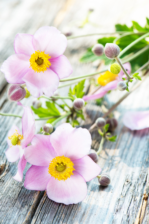 Anemone blossoms on wooden background