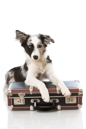 Puppy with suitcase isolated on white background