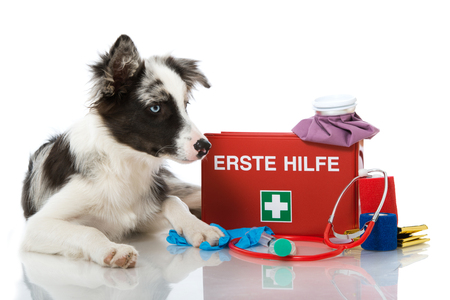 Young border collie with first aid kit isolated on white background