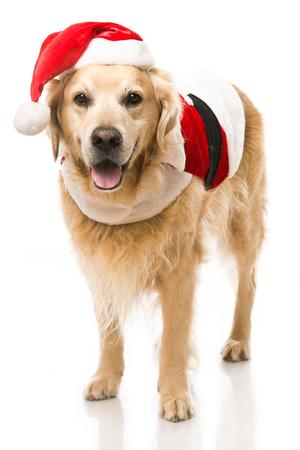 Christmas dog isolated on white