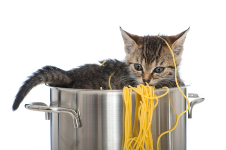 Tabby kitten with noodles in a cooking pot