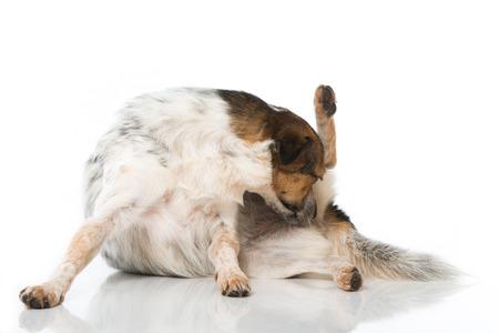 Mixed breed dog isolated on white