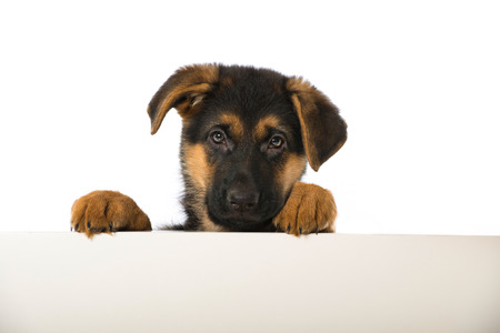 Puppy looking over a wall