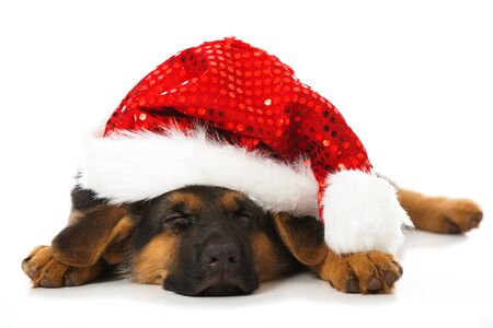 Sleeping puppy with Santa hat isolated on white
