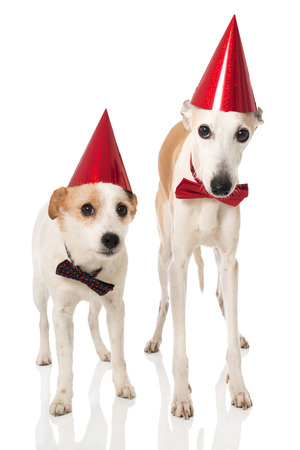 Two dogs with hat and tie Stock fotó