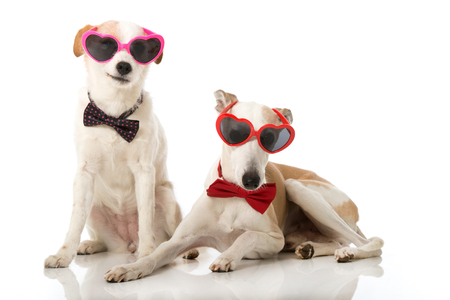 Two dogs with heart glasses Reklamní fotografie