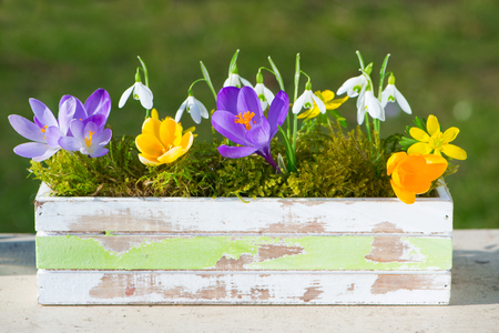 Spring flowers in a wooden box