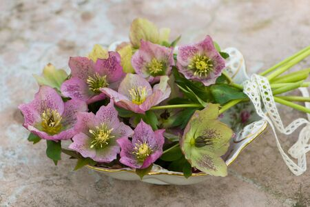 Helleborus flowers in a bowl Stock Photo