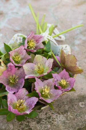 Helleborus flowers in a bowl