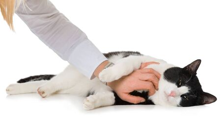 Black and white cat is caressed