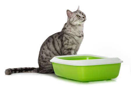 Silver tabby cat with cat toilet isolated on white background