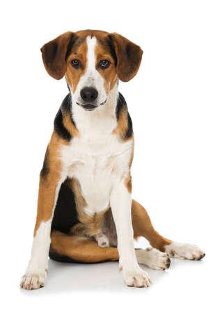Cross breed dog sitting isolated on white background Imagens