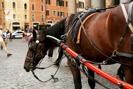 bridle: Horse, carriage horses, with coachman and bridle Stock Photo