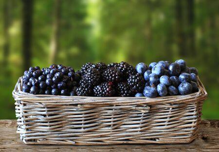 cosecha de frutos del bosque en una cesta, moras, arándanos
